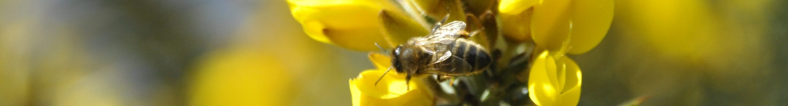 Merioneth Beekeepers' Association